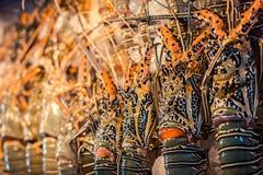 Spiny Lobster, shrimp fresh seafood market Thailand. Soft focus lobsters background. Stock Photos