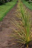 Spiny plants in garden Stock Photos