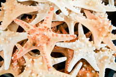 Spiny Starfish Souvenirs for Tropical Tourists Stock Photography