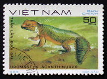 Spiny-tailed Lizard with the description `Uromastyx acanthinurus` from the series `Reptiles`, circa 1983. MOSCOW, RUSSIA - FEBRUARY 12, 2017: A Stamp printed in Royalty Free Stock Photo