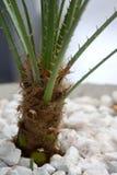 spiny växt fotografering för bildbyråer