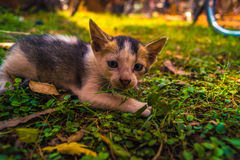 Spionera för kattungar arkivbilder