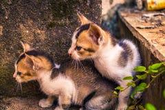 Spionera för kattungar fotografering för bildbyråer