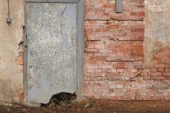 Spioni del gatto lungo la parete Immagine Stock