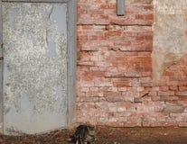 Spioni del gatto lungo la parete Fotografie Stock