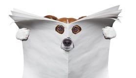 Spionshund, der eine Zeitung liest stockbild