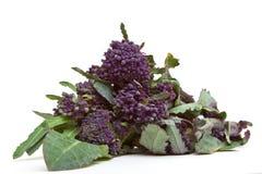 spira för broccoli royaltyfria foton