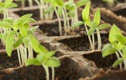 spira för växter arkivfoto
