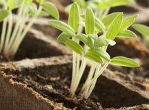 spira för växter Royaltyfri Fotografi