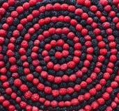 Spiraal van bes Framboos en moerbeiboom Stock Foto's