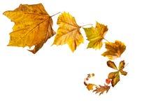 Spiraal van Geïsoleerd Dalend Autumn Leaves stock fotografie