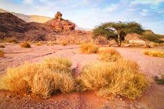 Spiraalvormig rots, boom en gras in woestijnlandschap, Israël Stock Foto's