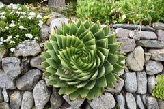 Spiraalvormige bloem Stock Afbeeldingen