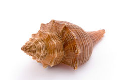 Spiraalvormige cockle-shell Stock Foto's