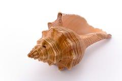 Spiraalvormige cockle-shell Stock Afbeelding