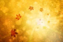 Spiraalvormige de bladerenachtergrond van de de herfstesdoorn Stock Foto