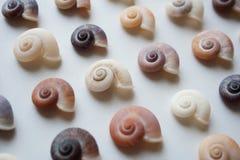 Spiraalvormige dichte omhooggaand van het zeeschelpenpatroon stock fotografie