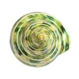 Spiraalvormige groene tropische overzeese shells, frontale mening Royalty-vrije Stock Afbeelding