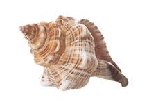 Spiraalvormige Overzees Geïsoleerdu Shell Royalty-vrije Stock Afbeeldingen