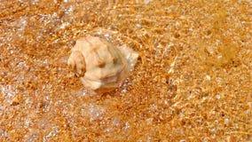 Spiraalvormige overzeese die shell op het zand met ondiep water hoogste mening wordt behandeld stock video