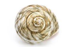 Spiraalvormige overzeese shell Royalty-vrije Stock Afbeelding