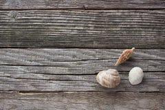 Spiraalvormige Overzeese shell Stock Foto