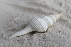 Spiraalvormige overzeese shell die op het zand leggen Stock Afbeelding