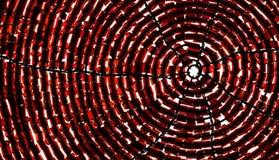 Spiraalvormige rug Stock Foto's