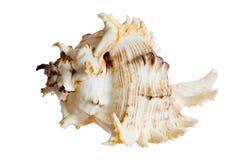 Spiraalvormige shell Stock Afbeelding