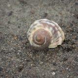 Spiraalvormige shell Stock Foto