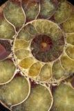 Spiraalvormige shell Macro Royalty-vrije Stock Foto's