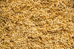 Spirad kornbakgrund äta som är sunt arkivfoton
