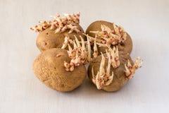 Spirade potatisar på en vit trälantlig tabell - selektiv fokus, kopieringsutrymme arkivfoton