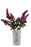 Spiraeabloemen in vasa royalty-vrije stock afbeelding