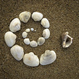 A spiral. Made of shells on the beach Stock Images