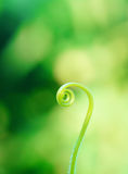 Spiral. Green leaf and nice spiral stock photography