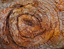 Spiral Bark Texture Stock Photo