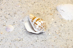 Spiral and clam shells on warm beach vacation destination. Spiral and clam shells on a warm beach vacation destination Stock Image