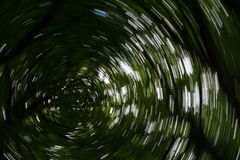 Spiral effect in forest Stock Image