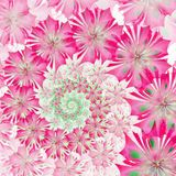 Spiral flower background. Pink palette. Computer generated graph Stock Image