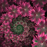 Spiral flower background. Pink palette. Computer generated graph Royalty Free Stock Photos