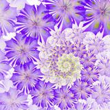 Spiral flower background. Purple palette. Computer generated gra Stock Photography