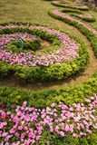 Spiral flower garden Stock Image
