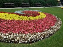 Spiral flowers in Sofia - 2015 summer. Beautiful spiral flowers in Sofia - 2015 summer Stock Photography
