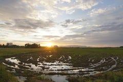 Spiral form i risfältfältet, efter du skördas Fotografering för Bildbyråer