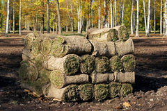 Spiral of fresh rolled grass turf. Spiral  stacked on pallets Stock Photo