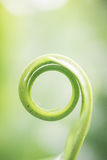 Spiral green lef just birth. On blur background Royalty Free Stock Photo