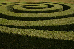 Spiral Hedge Royalty Free Stock Photography