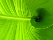 Spiral leaf Royalty Free Stock Photos