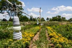 Spiral light bulbs Stock Photography